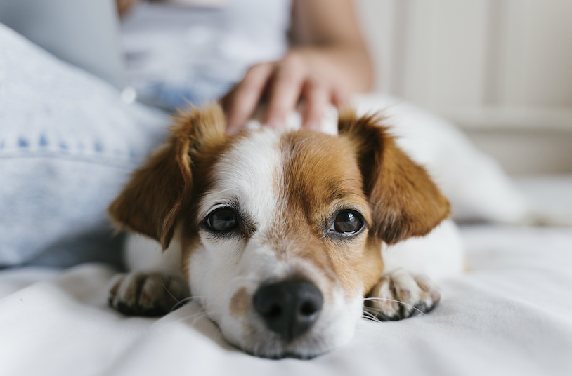 This is Why the Pet Care Industry Continues to Howl